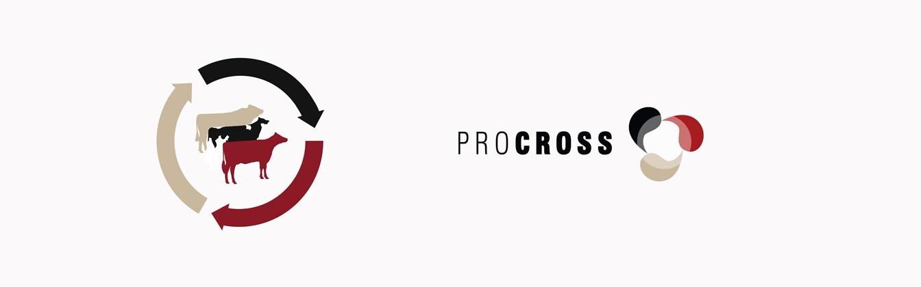 Procross Logo