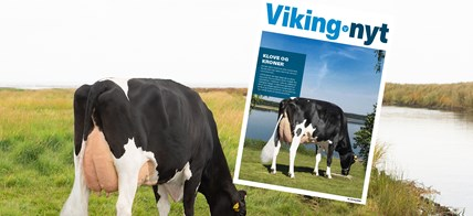 VH Montee Daughter No 43265 2872 From IS Midtgård Holsteins 6760 Ribe Scenic01 Uden Alex Vikingnyt 02 2021 Arkiv